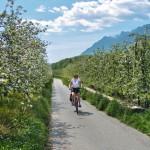 Etsch fietsroute Innsbruck - Bolzano