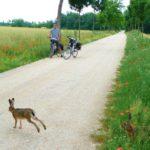 Fietsen Tsjechië, Zuidelijke rivierenroute