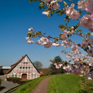 Altes land - Fietsen langs de Elbe naar de Noordzee