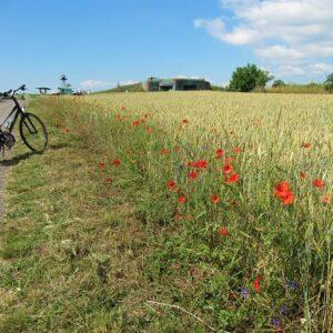 Klaprozen - fietsvakantie Zuid-Moravie- Tsjechië