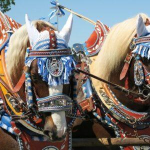 Passau paarden fietsvakantie Oostenrijk