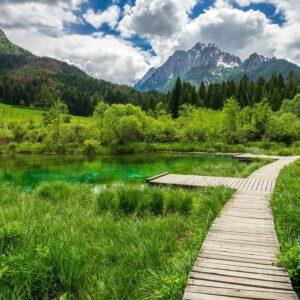 Zelenci Natuurreservaat Slovenië