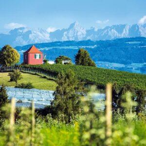Immenstaad uitzicht Alpen - fietsen rond de Bodensee