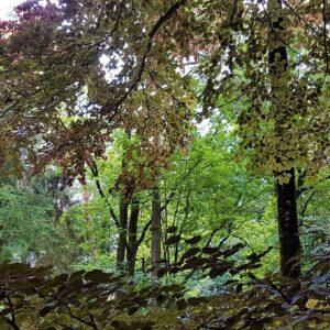 Fietsvakantie Achterhoek, Twente en Salland - Bergher bos