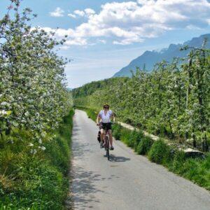 Merano fruitboomgaarden Fietsen Etsch Radweg
