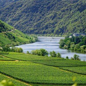 Wijngaarden Moezelstreek