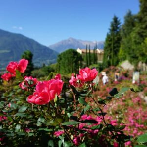 Zuid-Tirol bloemen klimaat